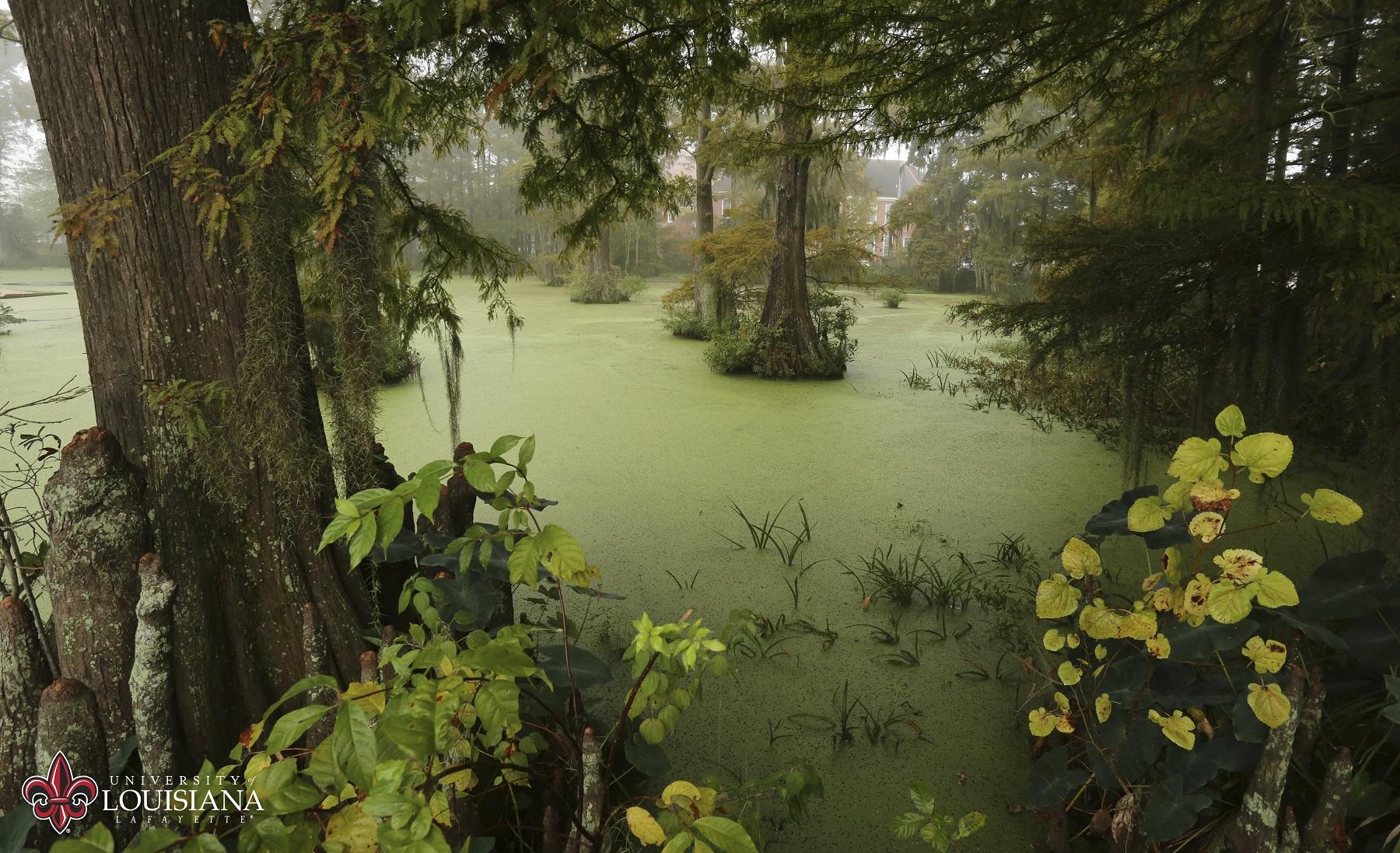 UL Lafayette Cypress Lake